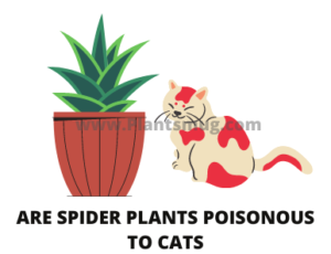Are Spider Plants Poisonous To Cats (1)