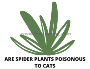 Are spider plants poisonous to cats ( Tips to Avoid this Situation)