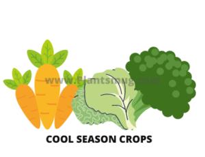 Cool-season Crops