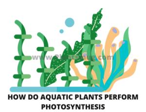 The function of aquatic plants