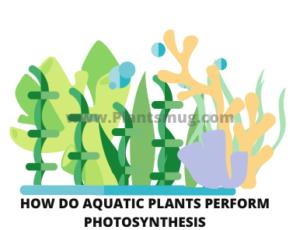 How do aquatic plants perform photosynthesis