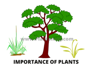 Importance of plants You must know