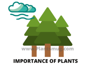Importance Of Plants (Benefits of Plants)
