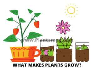 What makes plants grow?