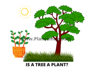 Is A Tree A Plant