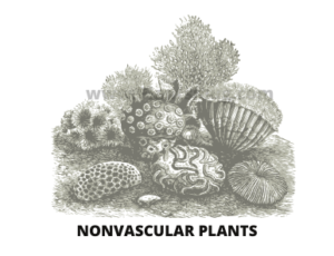 Characteristic of Nonvascular plants