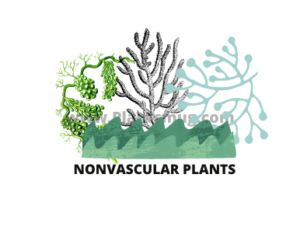 Examples of nonvascular plants