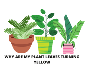 Solution Why are my plant leaves turning yellow
