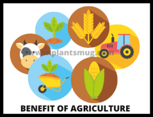 Benefit Of Agriculture