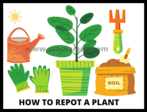 How To Repot A Plant (3)