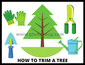 Benefits of tree trimming