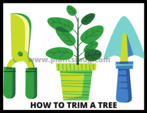 How To Trim A Tree Successfully