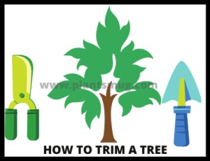 How To Trim A Tree ( tips & warning)