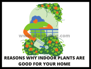 Reasons Why Indoor Plants Are Good For Your Home