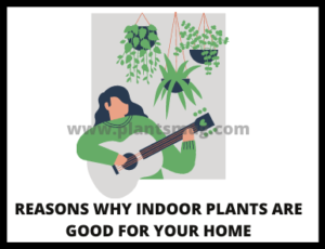 Reasons Why Indoor Plants Are Good For Your Home (Advantages)