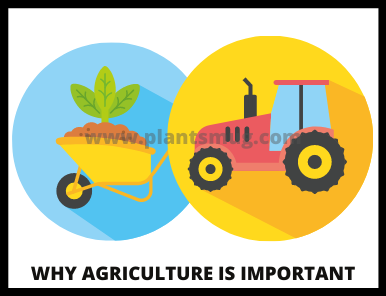 Why Agriculture Is important Understand In 10 Easy Steps