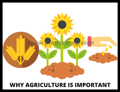 Why Agriculture Is important (2)