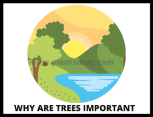 Why are trees important ( Random facts)