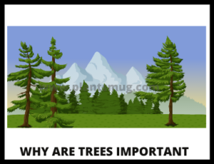 Why Are Trees Important Understand In 13 Easy Steps