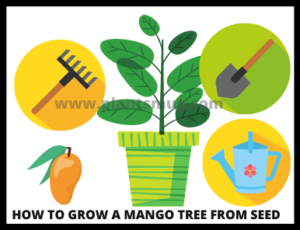How to grow a mango tree from seed ( Tips & Warning)