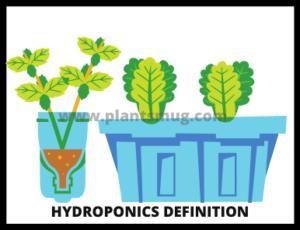 hydroponics definition & how hydroponics system works (steps)
