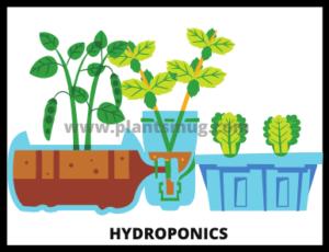 Hydroponics advantages