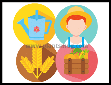 what is Agriculture definition