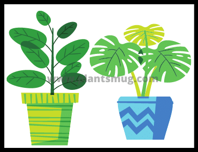 Buying a new plant Important checklist