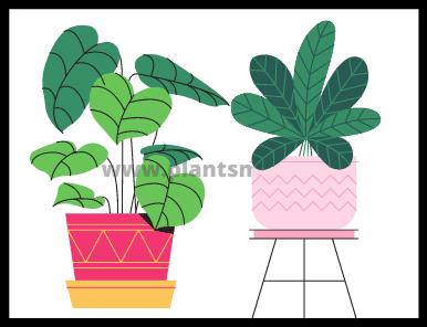 Companion Planting (tips & warning)