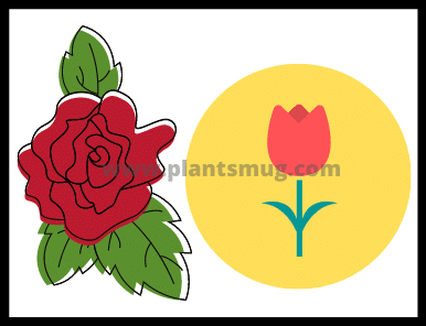 How to plant roses step by step guide