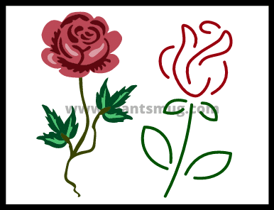 How to plant roses (tips & warning)