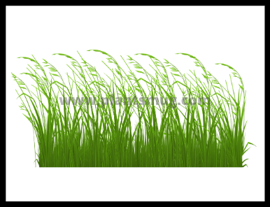 Steps On How to plant Buffalo Grass