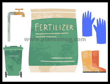 Things you require before lawn fertilizing