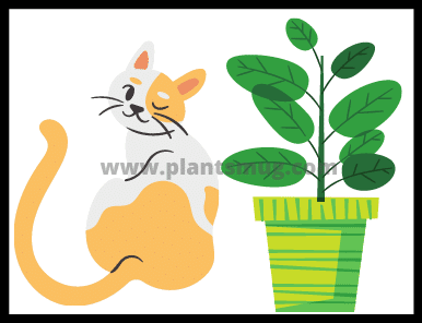 List of plants that are toxic to cats