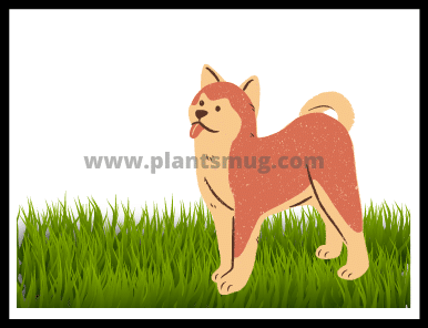 Why does my dog eat grass ( solutions & warning)