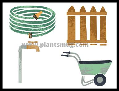 How Often To Water The Vegetable Garden