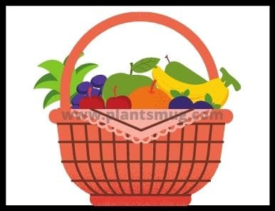 fastest growing vegetables and fruit plants