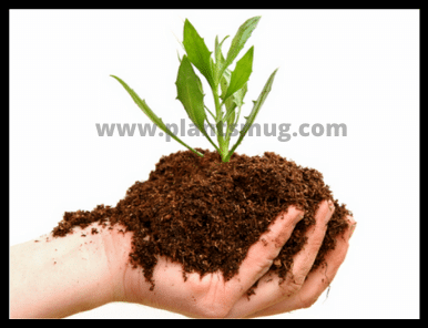 what are the benefits of vermicomposting