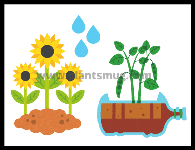 Plants And Water: 15 Interesting Things You Must Know