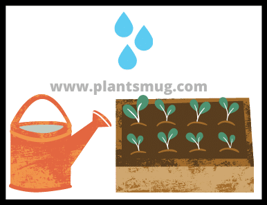 Plants And Water (3)
