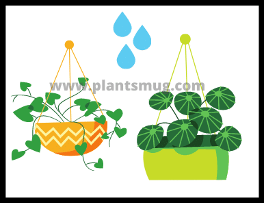 How do plants use water in photosynthesis?