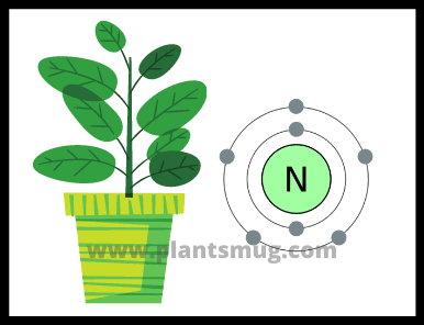 What is the importance of nitrogen in plants? (Reasons)